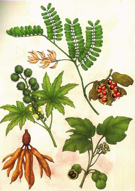 ilustplants