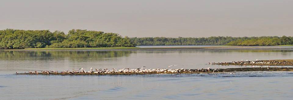 Bando de aves marinhas - Foto de Pedro C. Silva