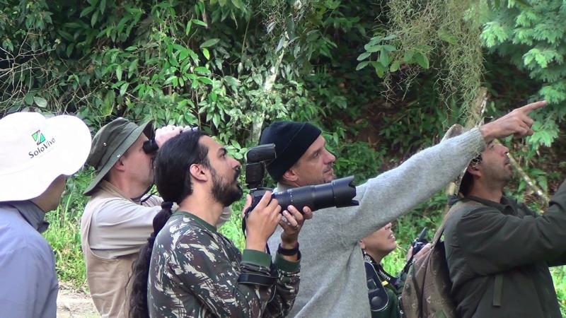 mostrando as aves